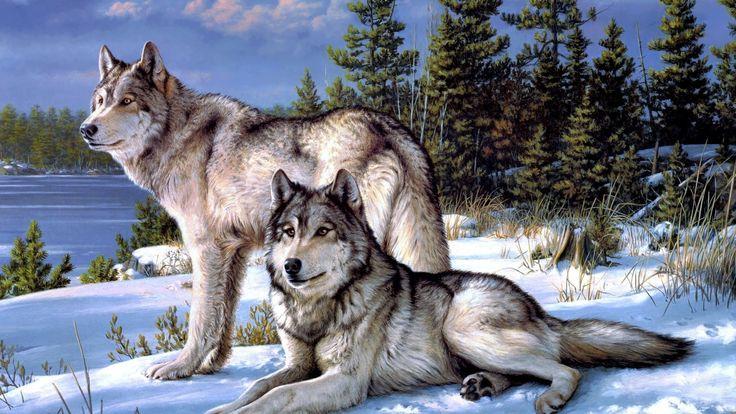 wolves-wallpaper-11.jpg (2560×1440)