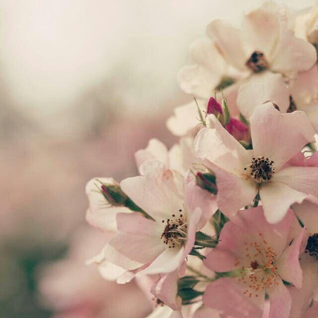 Flowers :3