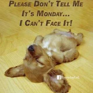 it's Monday: Sleep Dogs, Sleepy Time, Little Puppies, So Cute, Pet, Mondays Blue, Sleepy Puppies, Funny Stuff, Naps Time