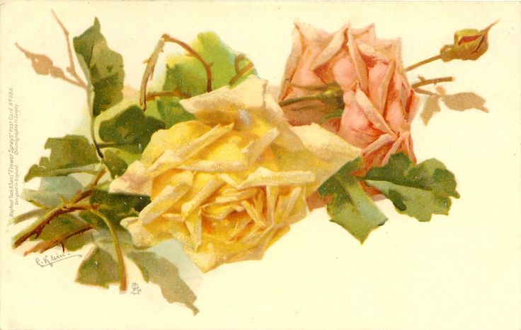 Pink & yellow roses by Catherine Klein ~ 1902.