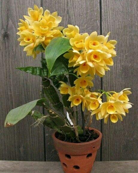 http://tokobungapedia.blogspot.co.id/p/toko-bunga-di-kerawang-karangan-bunga.html