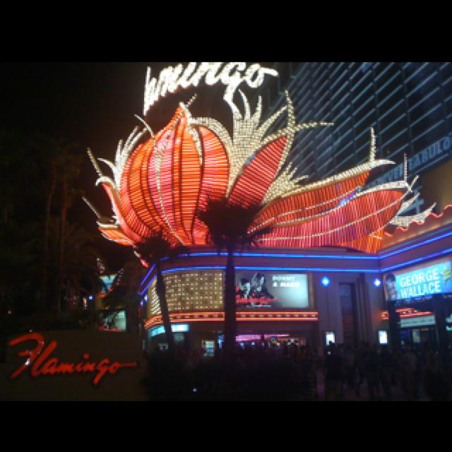 53 Best Xs Nightclub At Encore Las Vegas Images On