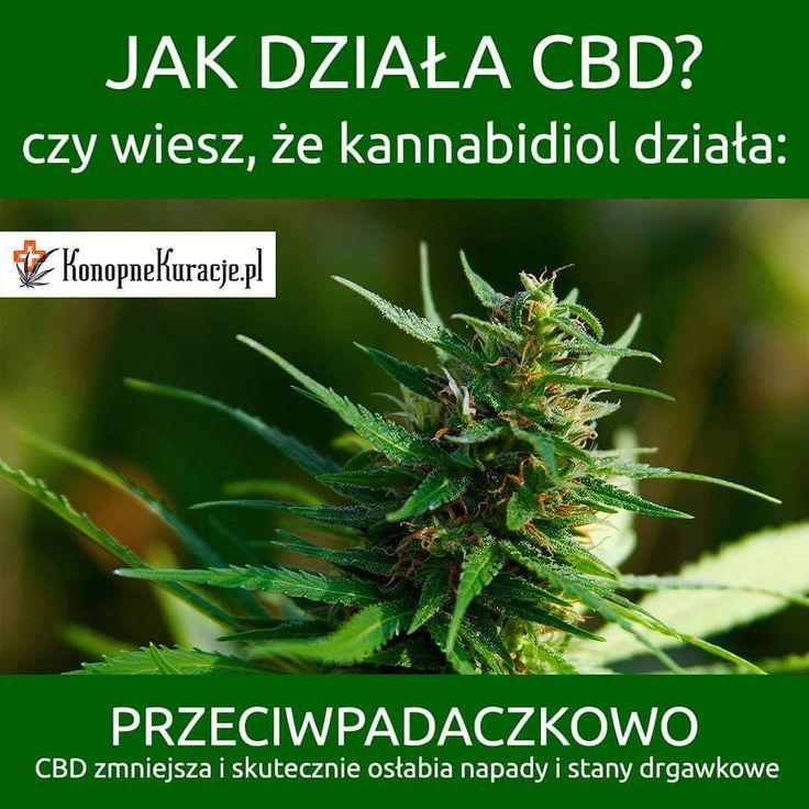 Jak działa CBD?  czy wiesz, że kannabidiol działa: Przeciwpadaczkowo  CBD zmniejsza i skutecznie osłabia napady i stany drgawkowe  #cbd #olejkicbd #olejekcbd #olejcbd #konopnekuracje #konsultacje #zdrowie #warszawa #polska
