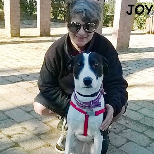 With my mom at the park! 🐾🐾🐶 Follow JOY at her Facebook page for many more photos and videos:  https://www.facebook.com/JOYMixedBreedGirl/ 🐾 #dog #instagramdogs #ilovemydog #instapuppy #dogfamily #doggie #ilovemypet #dogofinstagram #happydog #dogface #dogsofig #dogselfie #doglovers #dogsofinstaworld #petstagram #doglover  #petlover #instadog #dailypawwoof #happydog_feature #dogsubmit