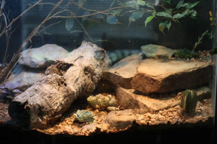 Gecko Tank