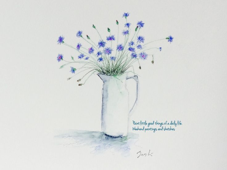 Cornflowers Watercolour pencils Language of flower: delicacy, refinement