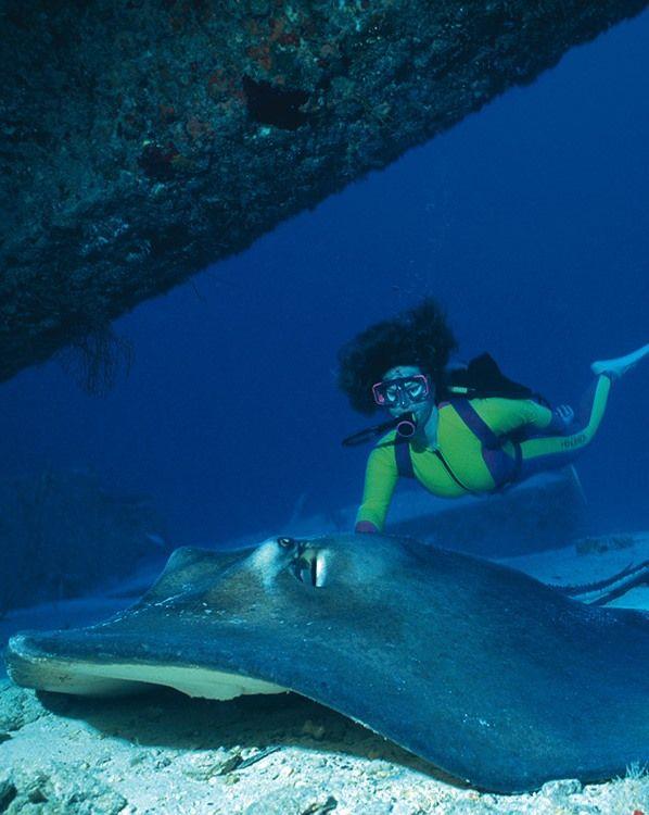 Neal Watson's Bimini Scuba Center  Everything on scuba diving: http://divingtales.com.