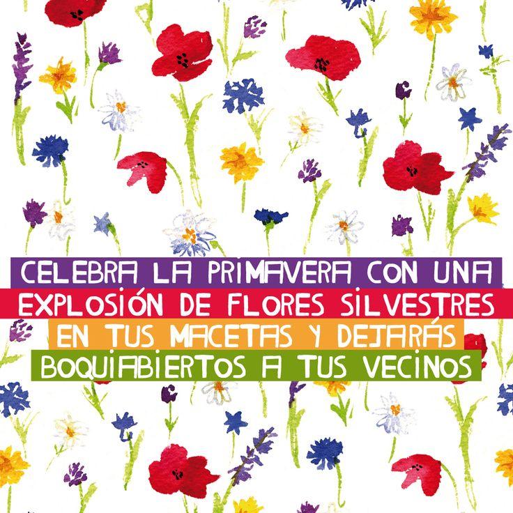 Celebra la primavera con una explosión de Flores Silvestres