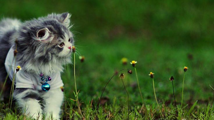 Cari Toko Hewan Yang Jual Kucing Persia Murah