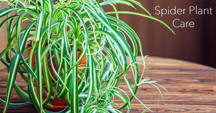 47 best yard back yard plant favs images on pinterest flower gardening plant sale and plants. Black Bedroom Furniture Sets. Home Design Ideas