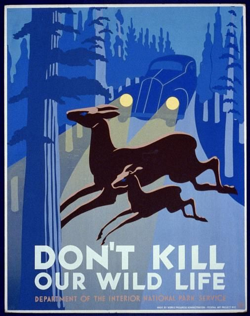 Don't kill our wild life. WPA Poster / 1936-40: Wild Life, Poster Frame-Black, Vintage Poster, National Parks, Wildlife, Wpa Poster, Vintage Travel Poster, Art Deco, Art Projects