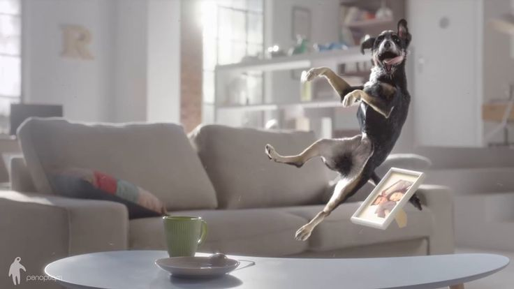"""This is """"CG Animals"""" by panoptiqm on Vimeo, the home for high quality videos and the people who love them."""