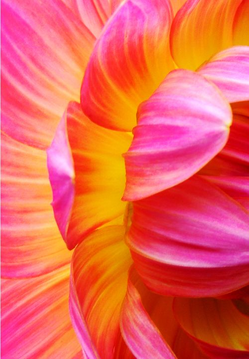 345 best orange fuschia images on pinterest flowers orange pink and orange flower macro mightylinksfo