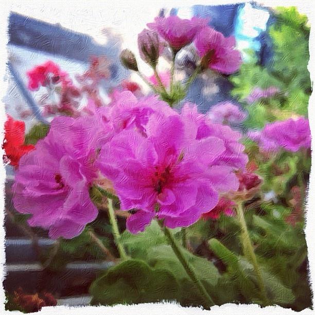 Flower Strokes