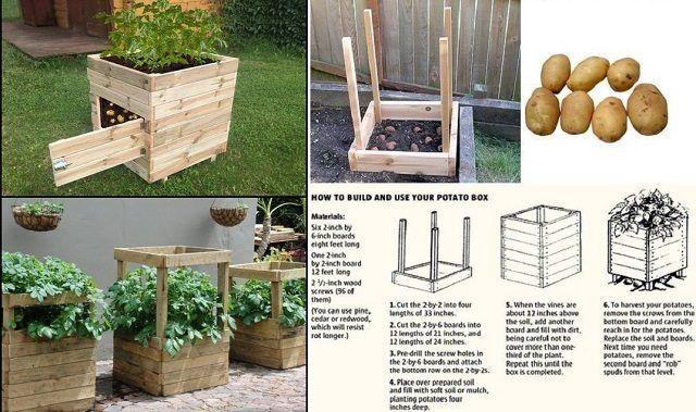 How To Build And Use Your Potato Box Potato Box Diy Planters