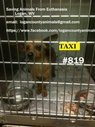 Taxi is an adoptable Dachshund Dog in Logan, WV.  Taxi is in the Logan County Pound, a high kill facility SAFE is a 501 3C non profit organization based in rural Logan county WV. We require reference...