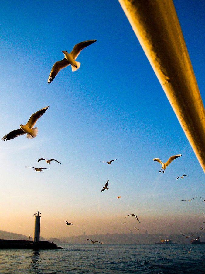 Seagulls at the Bosphorus , Turkey