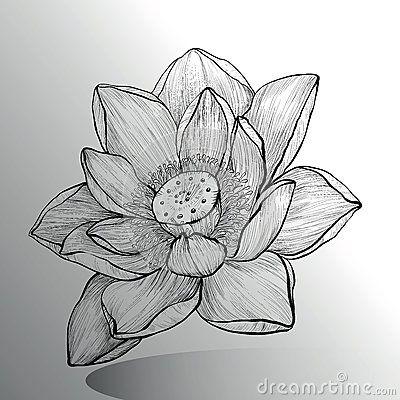best 25 lotus drawing ideas on pinterest