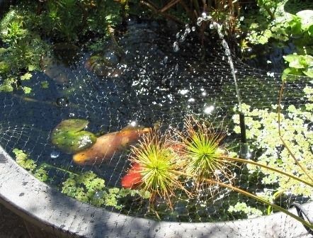 17 best ideas about small water gardens on pinterest for Container ponds with fish