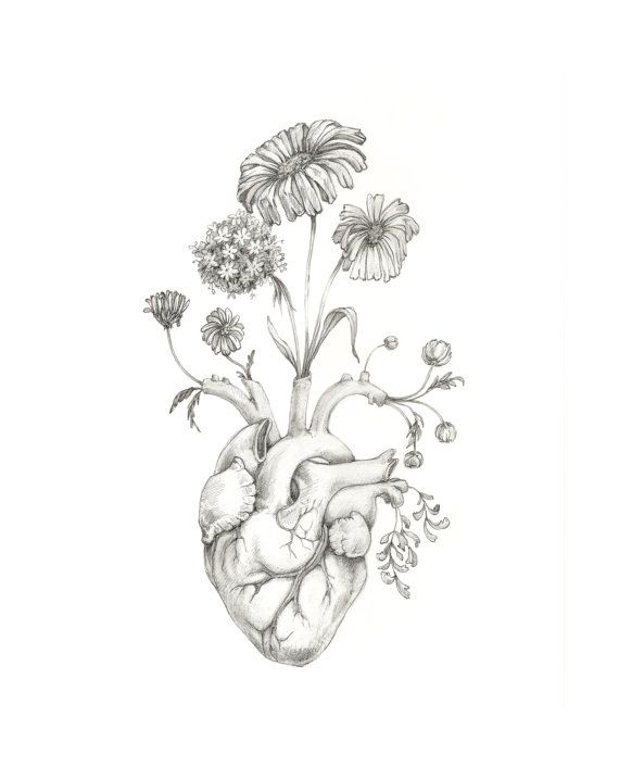 "8×10″ PRINT of unique drawing ""Blooming Coronary heart""- graphite, artwork, anatomy, floral, coronary heart, valentine"