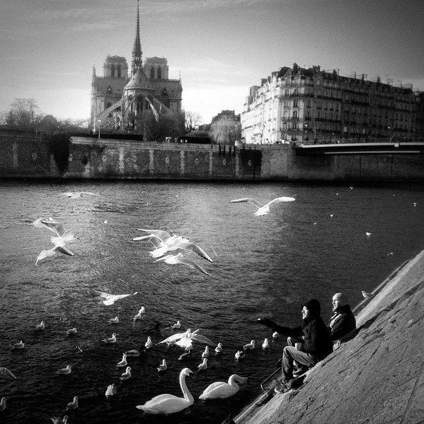 Pont Saint Louis, Paris by Théara Kham