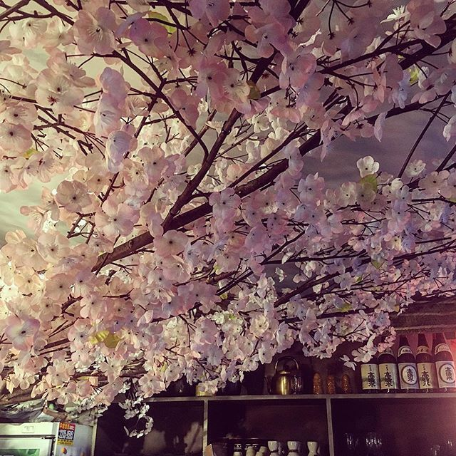【daniel_deacon】さんのInstagramをピンしています。 《In here it's always #spring #itaewon #seoul #cherryblossoms #sashimi #sashimirestaurant #japanese #japaneserestaurant #korea #southkorea #igkorea #igerskorea #ig_seoul #iseoulu #travel #travelgram #instatravel #iphoneonly #iphoneography #서울 #이태원 #이태원맛집 #사시미 #회 #벗꽃 #벗꽃나무 #여행 #일본 #일본식당》