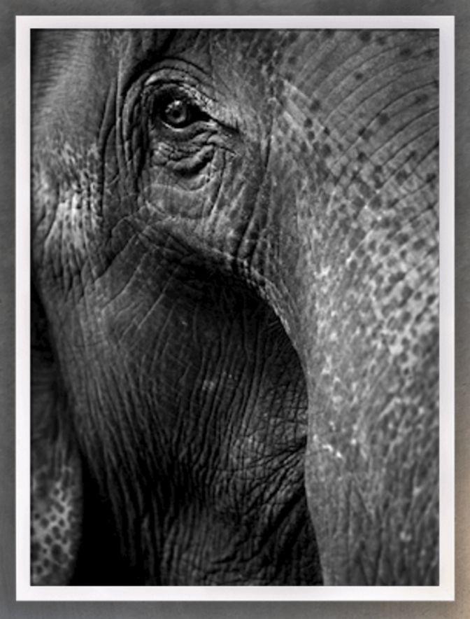 Svartvit fototavla  Pondus av Henrik Brunnsgård finns till salu i numrerad upplaga på printler.se #printler #fotokonst #posters #tavlor #inredning #svartvitt