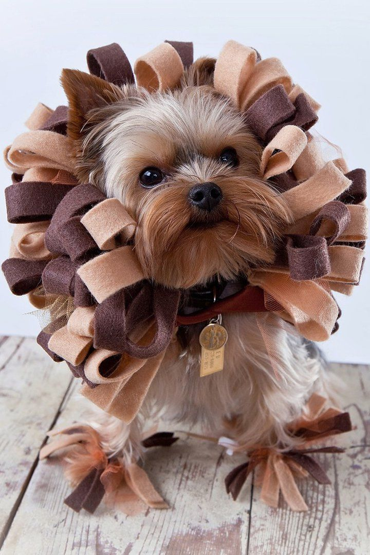 dog halloween costumes amazon uk