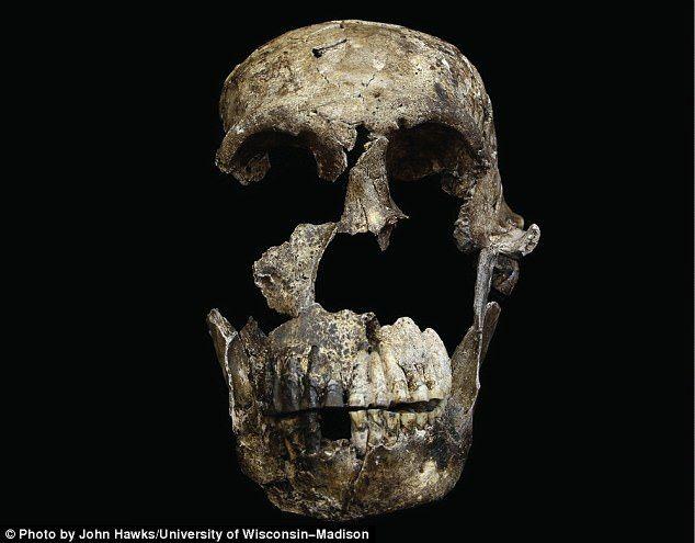 Πρώτη φορά αποδεικνύεται ότι ένα άλλο είδος ανθρωποειδές επέζησε μαζί με τους πρώτους ανθρώπους στην Αφρική!
