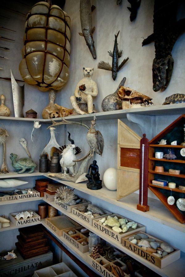 curiosity cabinet/room