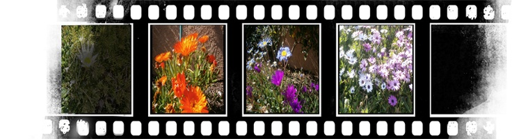 SpringThoughts, Spring, Photography