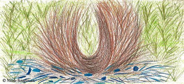 Les 88 meilleures images propos de cole bibi sur for L oiseau jardinier
