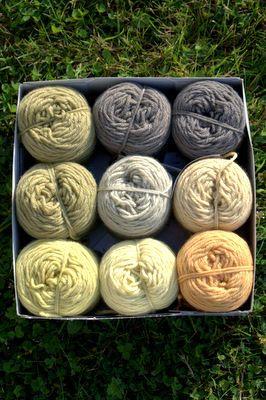 Froufrou et capucine_teintures de laine