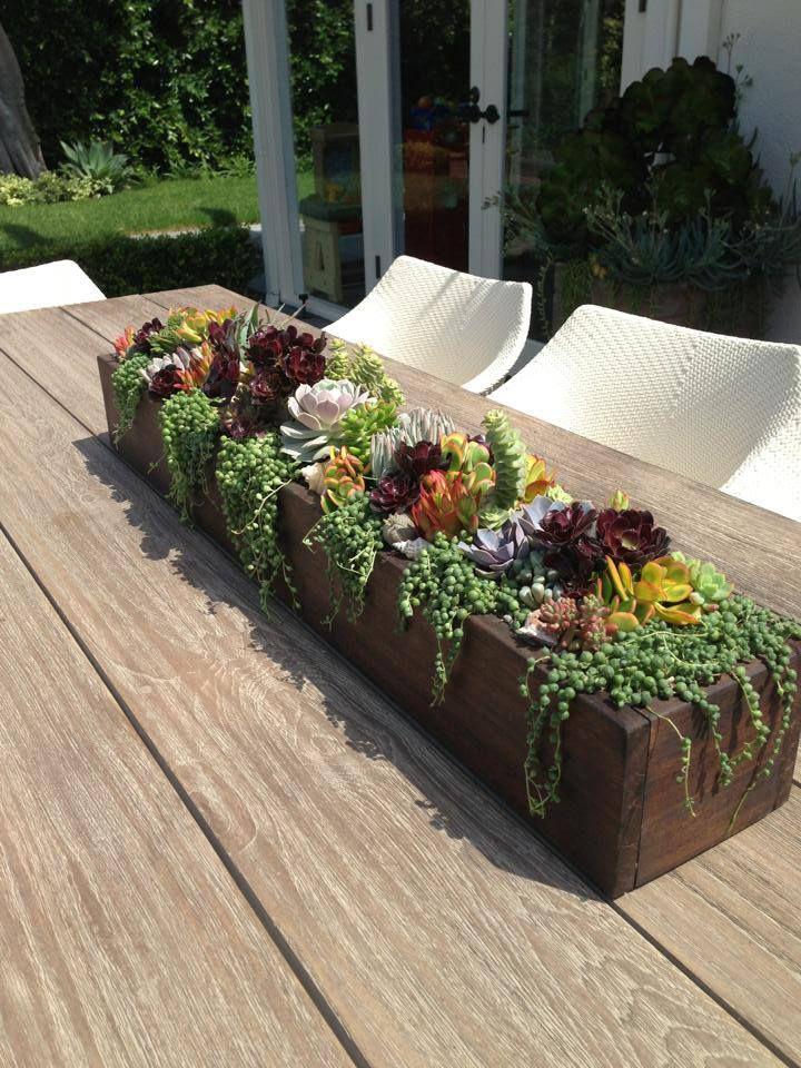 Beautiful teak succulent centerpiece designed by Simply Succulent https://www.facebook.com/pages/Simply-Succulent/222665291108990