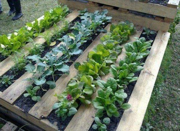 Mobel Aus Europaletten Basteln Small Vegetable Gardens Pallets Garden Pallet Garden