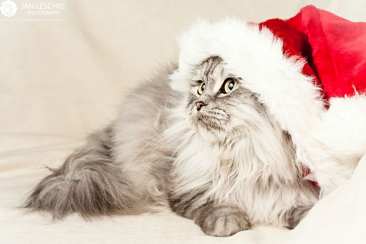 Wish you a nice christmas time #christmas #cat