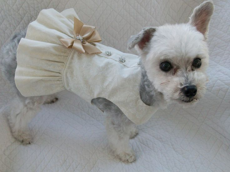 Wedding Dog Dress Harness for Dog or Cat Outfit by graciespawprints on Etsy https://www.etsy.com/listing/153492356/wedding-dog-dress-harness-for-dog-or-cat
