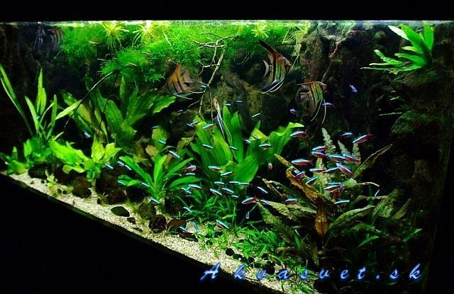 1000 images about amazon blackwater biotope on pinterest for Amazon fish tanks for sale