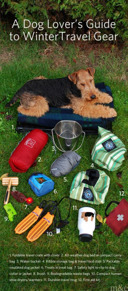 Best Dog Travel Accessories Ideas On Pinterest Dog Products - Cat and dog duo take the best travel photos ever