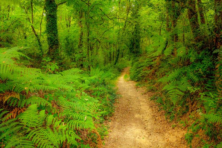 Photo Forest Trails by Vitor Santos on 500px