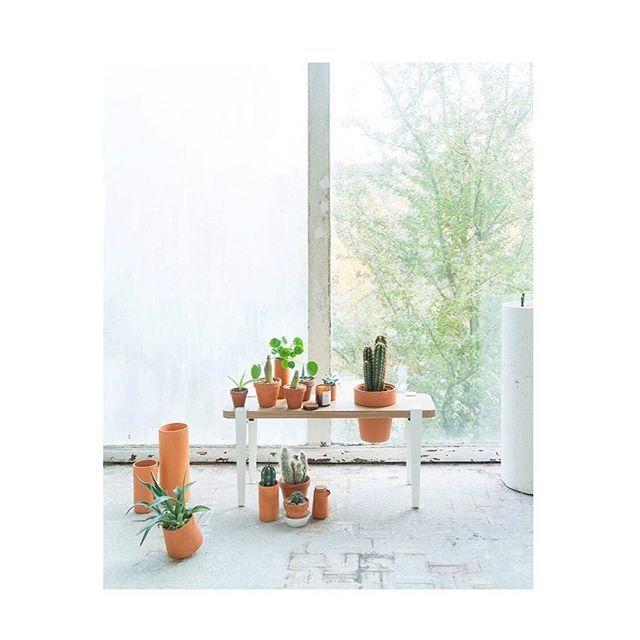 Le banc végétal issu de notre collab avec @bergamotte_paris a trouvé sa place chez @joelixjoelix 🌵🌵 #tiptoedesign