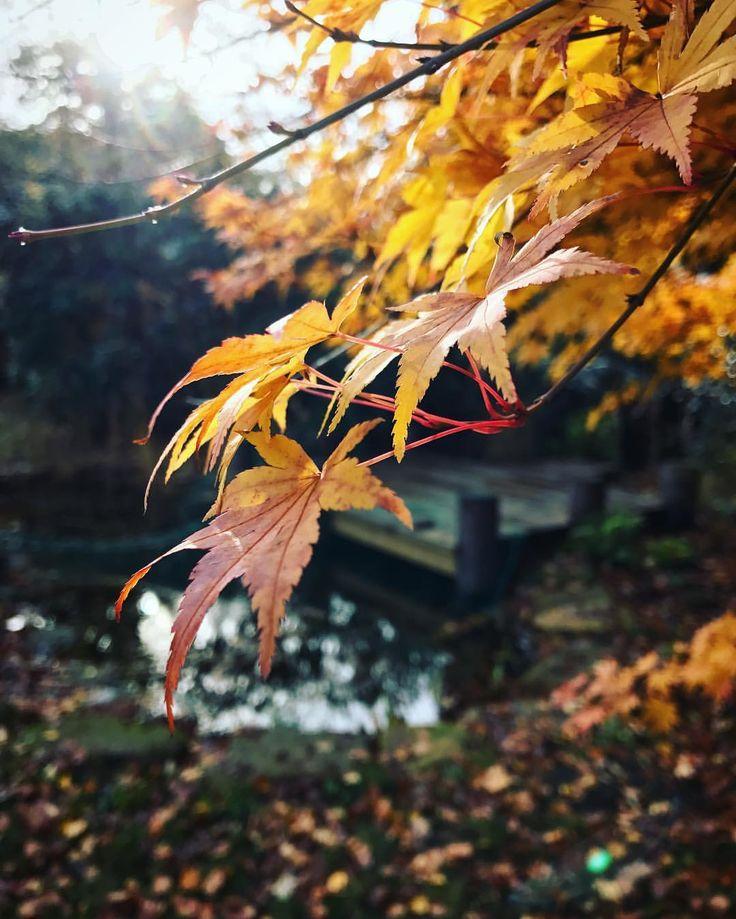 "83 Likes, 3 Comments - Alexa Holroyd (@alexaholroyd) on Instagram: ""Home 🏡 #nature #reflection #landscape #garden #autumn #light #createexplore #artofvisuals #iphone7…"""