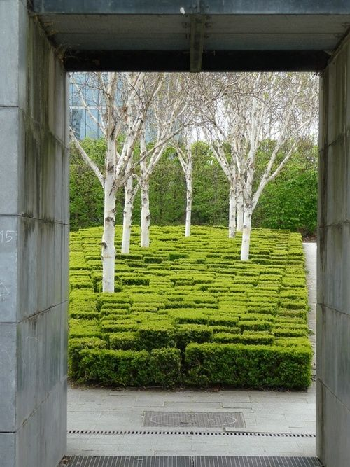 Birch in buxus