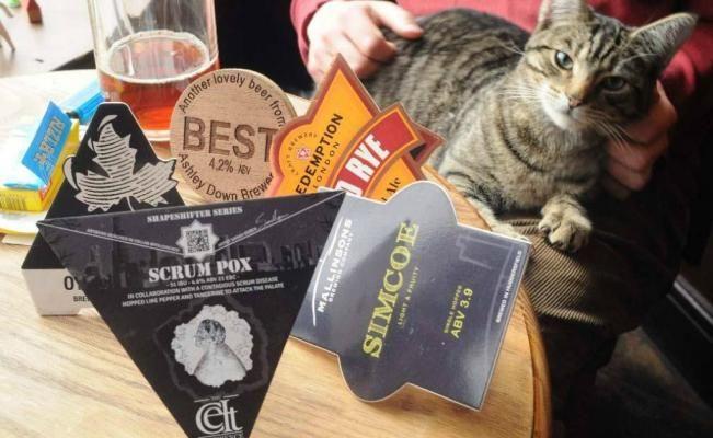 Gatos y cerveza, la mejor combinación que hace del bar Bag of Nails, uno de los preferidos en Bristol. (Foto: Cortesía Bag of Nails)