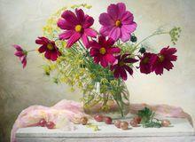 De bloemen van de kosmos Royalty-vrije Stock Foto's