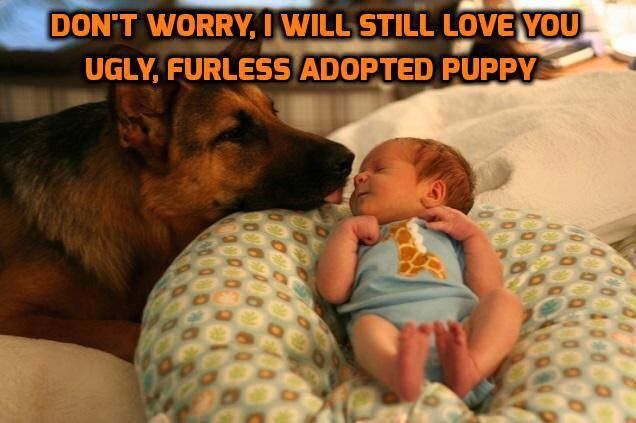 Don't worry.....I will still love you, ugly, furless, adopted puppy (says your dog to the new baby)