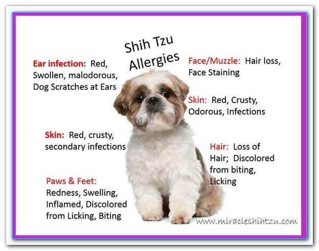 Best Food For Dogs With Allergies Shih Tzu With Images Shih