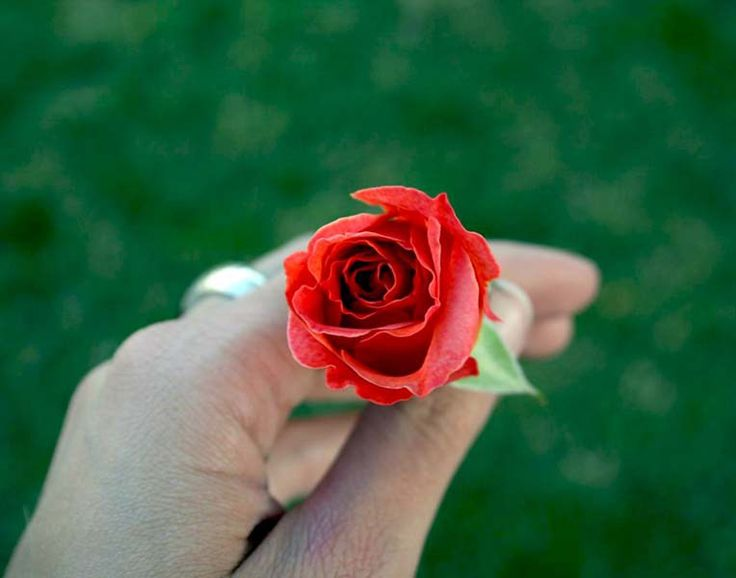 The old man with a rose – Inspirational Story