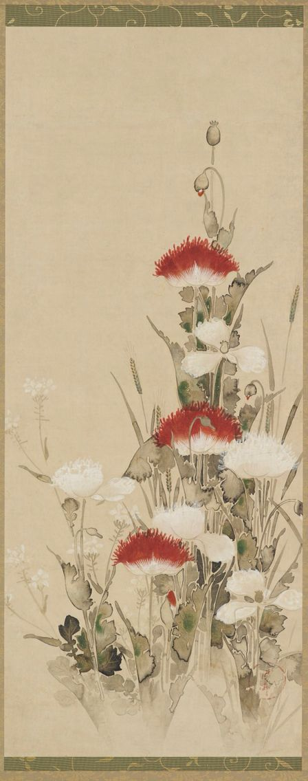 Red en white poppies Coulor and ink on paper by Tawaraya Sotatsu . Japan