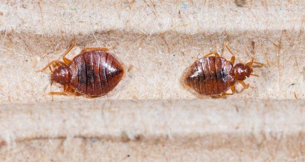 50 Insane Animal Facts That Will Leave You Asking Wtf Pest Control Bed Bug Control Animal Facts